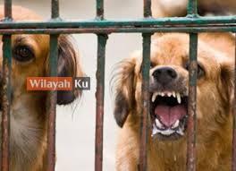 SKV palsu, DVS arah batal permohonan tiga ejen pengeksport anjing
